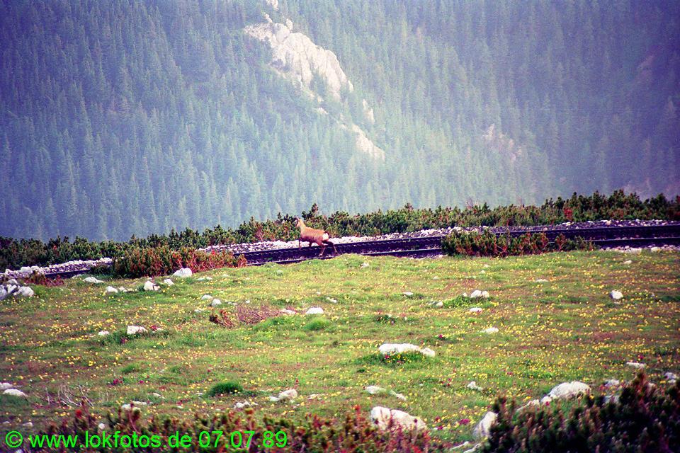 http://www.lokfotos.de/fotos/1989/0707/09600.jpg